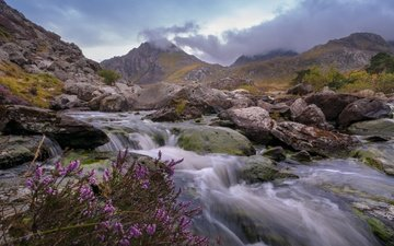 flowers, river, mountains, stones, england, heather, wales, ogwen valley, glyderau mountains, afon ogwen river, the river afon, ogwen