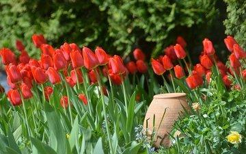 цветы, бутоны, лепестки, весна, тюльпаны, кувшин, весенние