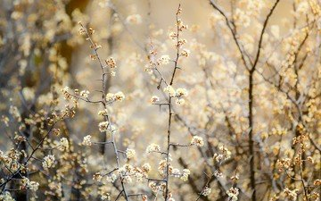 nature, flowering, plants, branches, bokeh