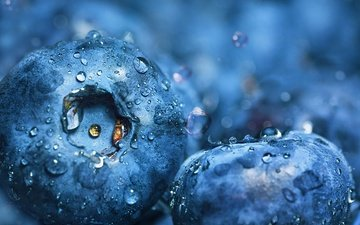 water, macro, drops, berries, blueberries, dashakern