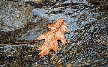 water, autumn, stream, sheet, leaf