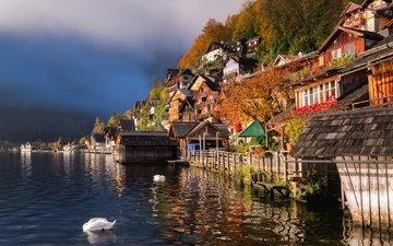 вода, озеро, австрия, дома, птицы, лебеди, гальштат, гальштатское озеро, халльштатт