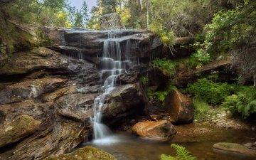 вода, природа, камни, растения, водопад