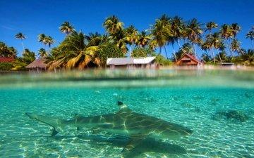 небо, вода, рыбы, пальмы, океан, курорт, лагуна, прозрачность, акулы