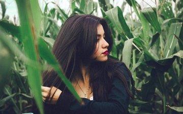 девушка, взгляд, модель, профиль, губы, кукуруза, лицо, длинные волосы, заросли