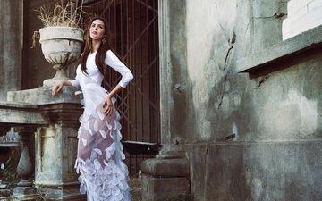 девушка, платье, взгляд, модель, волосы, лицо, даниэла торрес