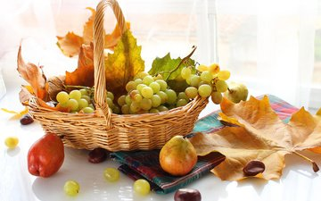 leaves, grapes, fruit, autumn, basket, berries, maple, pear
