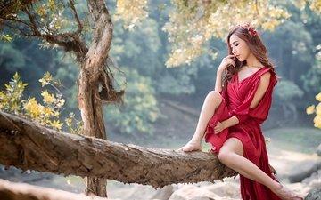 природа, девушка, поза, ножки, волосы, азиатка, бревно, красное платье, serena