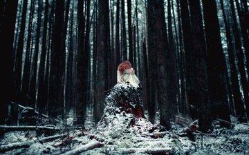 деревья, снег, природа, лес, девушка, стволы, белое платье, пень, рыжеволосая