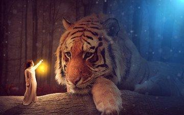 тигр, морда, свет, девушка, взгляд, хищник, фонарь, большая кошка