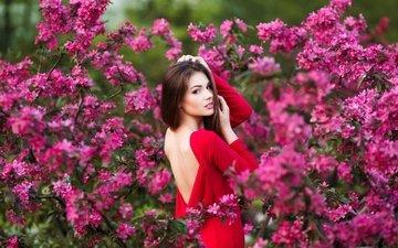 цветы, девушка, платье, кусты, сад, макияж, прическа, позирует, в красном, шатенка