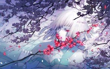 цветы, ветка, девушка, сакура, белые волосы