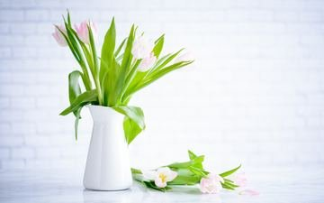 цветы, букет, тюльпаны, ваза