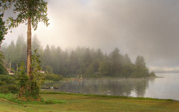 trees, lake, river, nature, forest, fog