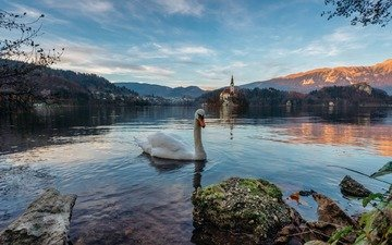 lake, mountains, landscape, bird, alps, swan, slovenia, bled