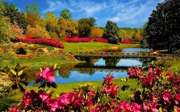 цветы, природа, мост