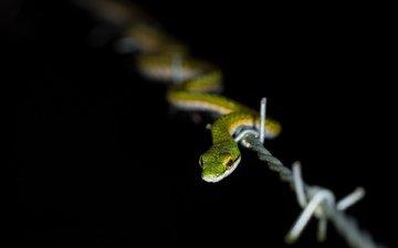 природа, проволока, змея, колючая проволка
