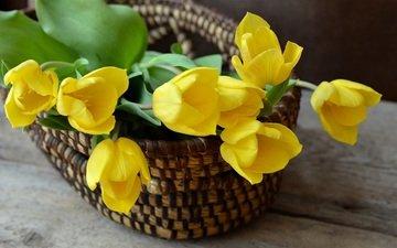 цветы, бутоны, лепестки, букет, тюльпаны, желтые, корзинка
