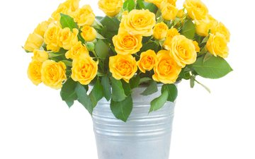 flowers, roses, bouquet, white background, yellow, bucket