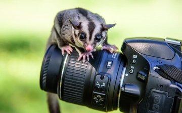 фотоаппарат, животное, камера