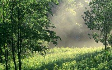 grass, sunrise, nature, greens, forest, summer, glade