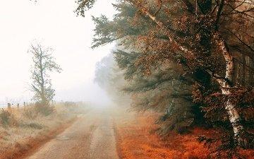 дорога, деревья, туман, поле