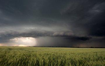 nature, landscape, field, summer, the storm, cloud