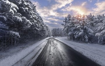road, snow, nature, forest, winter