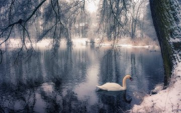 lake, tree, winter, park, branches, bird, swan