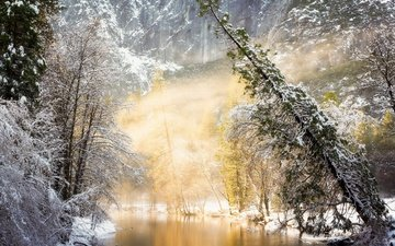 river, the sun, nature, forest, winter