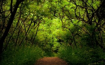 trees, greens, forest, track, the bushes
