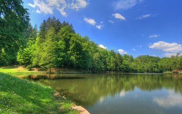 trees, lake, greens, forest, summer