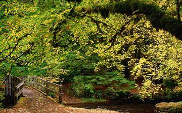 деревья, река, природа, лес, листва, мост