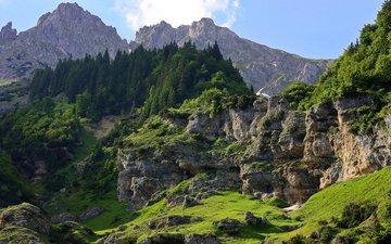 деревья, горы, скалы, камни, зелень, лес, склон, мох