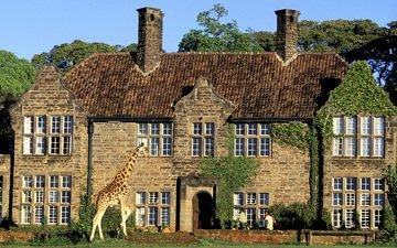 дом, здание, жираф