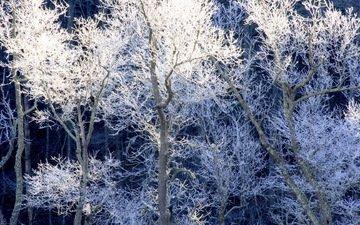 деревья, снег, природа, зима, ветки, иней