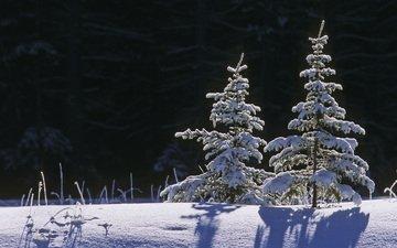 снег, природа, зима, пейзаж