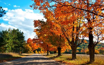 the sky, road, clouds, trees, nature, forest, autumn