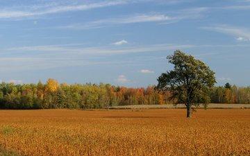 the sky, trees, field, autumn