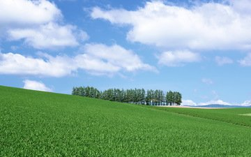 the sky, grass, clouds, trees, field, dal, weed, ate, hill