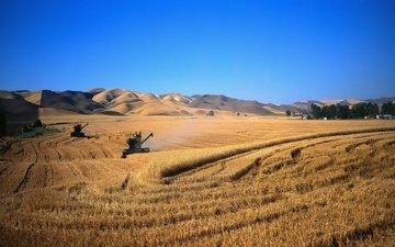 пейзаж, поле, комбаины, пшеница