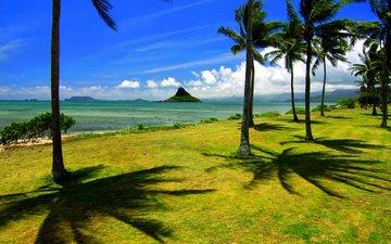 природа, америка, побережье, пальмы, тропики, гавайи