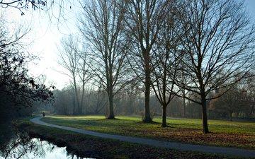 деревья, утро, тропа
