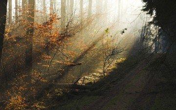 дорога, деревья, вечер, лес, утро, осень, дымка, солнечные лучи, утренний свет