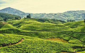 небо, горы, холмы, поле, чай, индия, плантация, чайная плантация