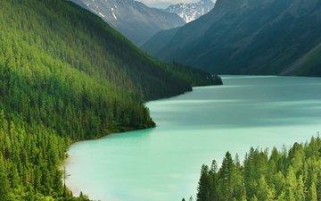 деревья, озеро, горы, тайга