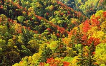 деревья, цвета, осень, склоны, палитра