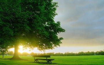 дерево, поле, рассвет, лавочка