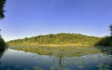 деревья, вода, озеро, листья, даль, 47