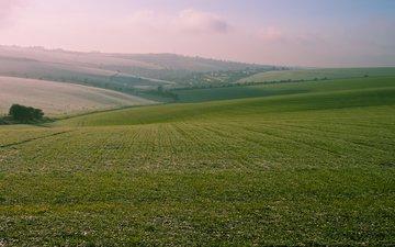 небо, трава, природа, дерево, пейзаж, туман, поле, пастбище, холм, 95